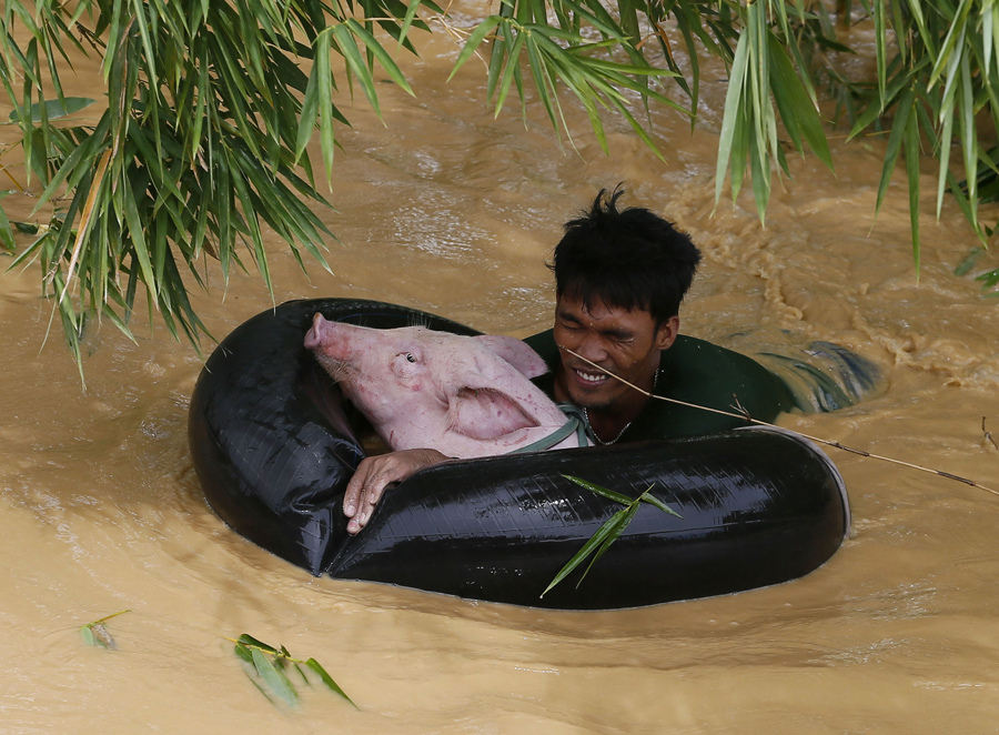 70 Of The Most Touching Photos Taken In 2015 - A man floats a pig to safety as Typhoon Koppu causes flooding in Sta Rosa, Philippines.