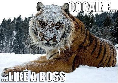 tiger+cocaine+like+a+boss.jpg
