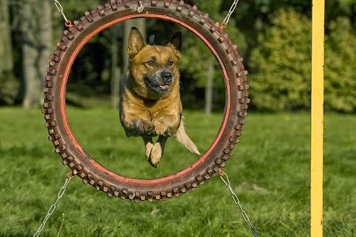 Szkolenie psów metodami pozytywnymi