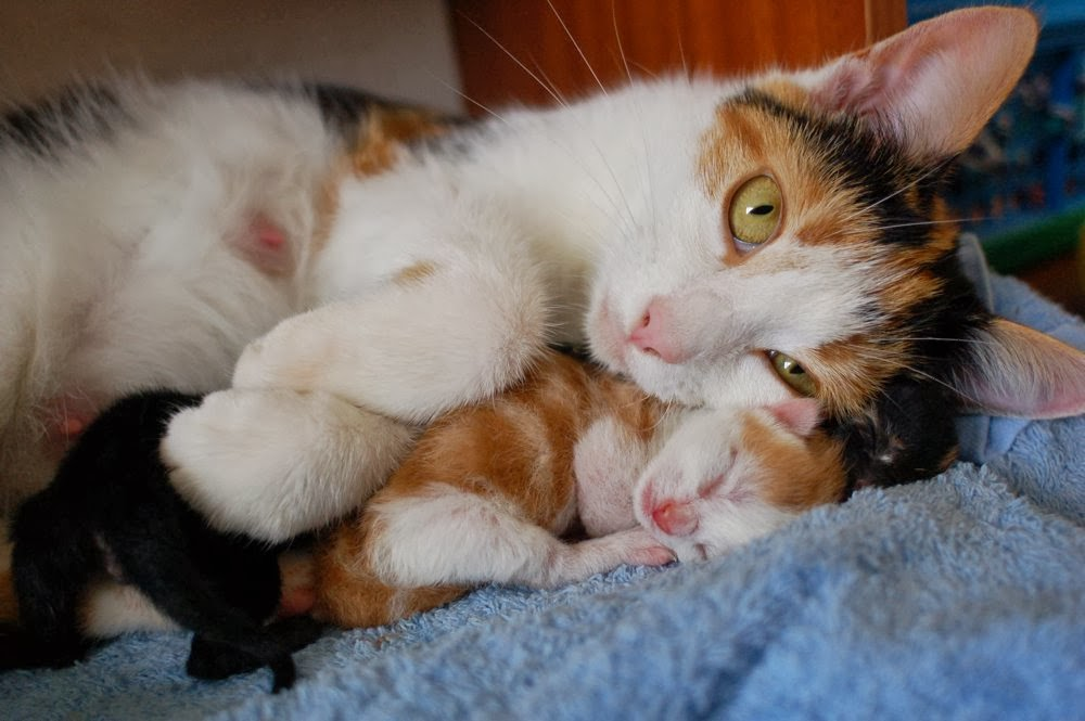 Funny cats - part 88 (40 pics + 10 gifs), mommy cat with her newborn kitten