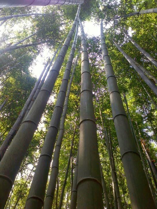 JUKNOKWON (BAMBOO GARDEN)     竹綠園