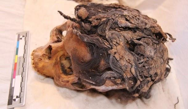 Descoberta mulher do antigo Egipto com 70 extensões de cabelo
