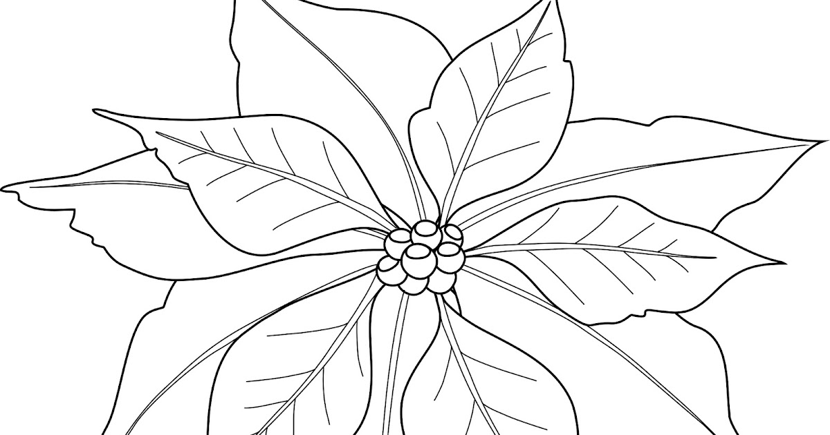 poinsettia border black and white