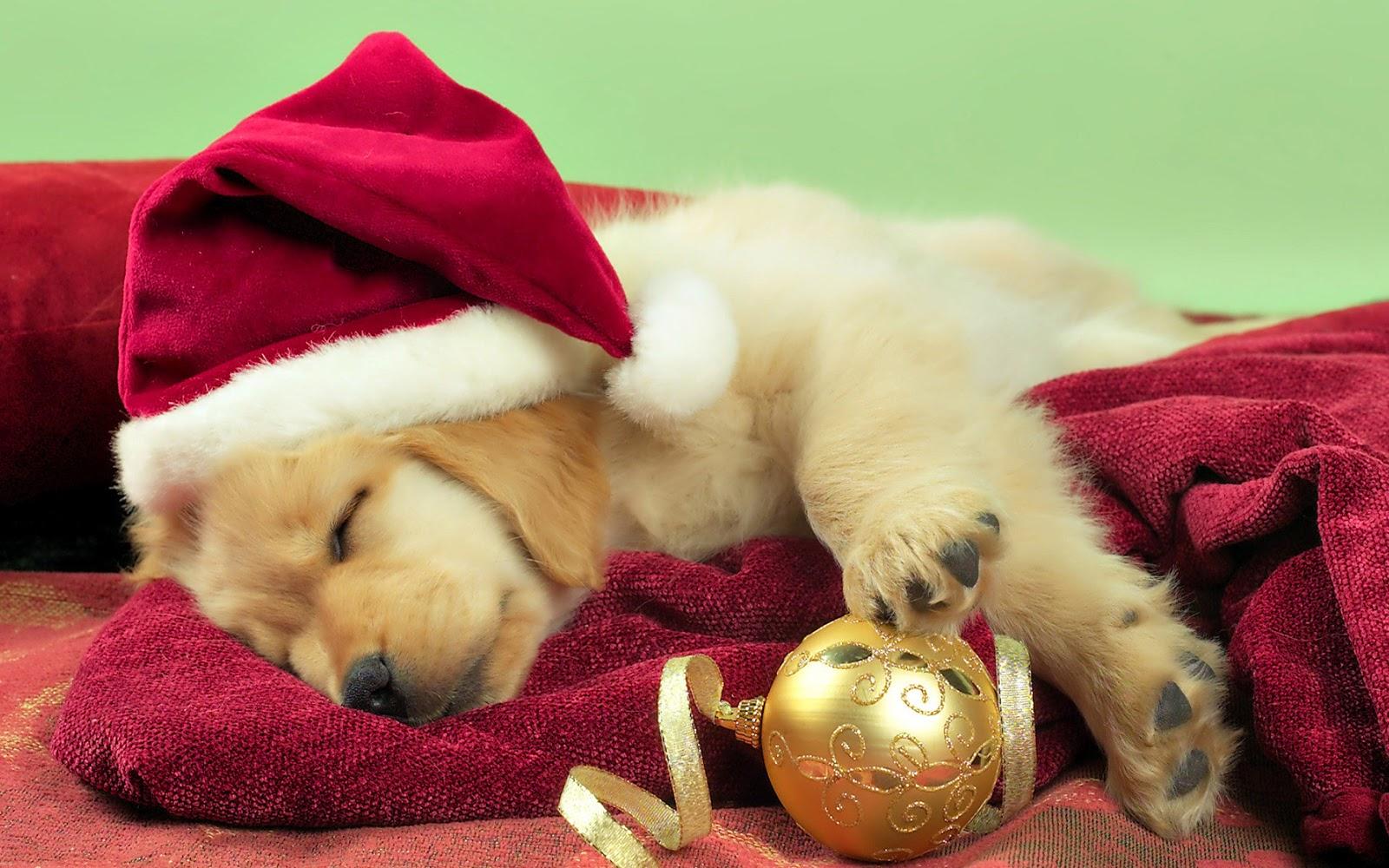 Bildergebnis für weihnachten