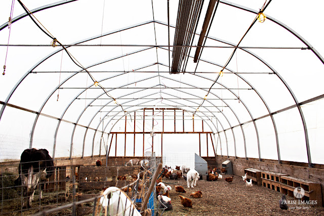 inside_animal_hoop_house_backyard_chickens_cow_farm_photography by sarah parisi for this beautiful life