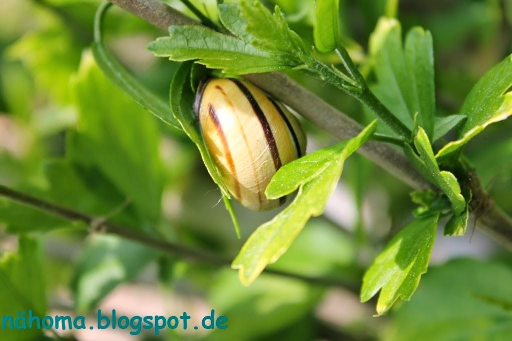 https://www.mein-schoener-garten.de/de/gartenpraxis/ziergarten/hibiscus-richtig-schneiden-89601