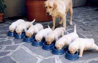 Giai đoạn đầu đời rất quan trọng trên chó con.