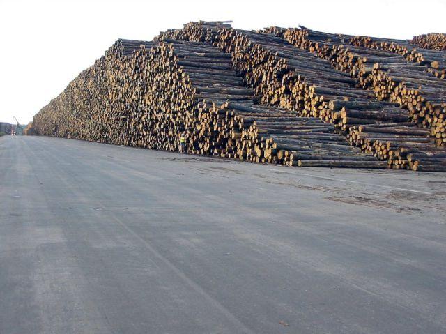 [Obrazek: ilegal-logging.jpg]