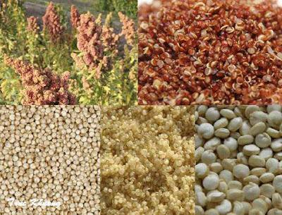 Tác dụng làm đẹp của hạt quinoa