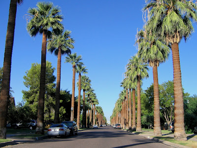 palm lane runs through the historic districts in downtown phoenix