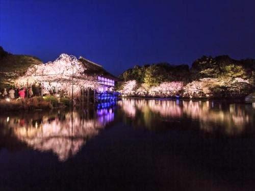 平安神宮 紅しだれコンサート2015