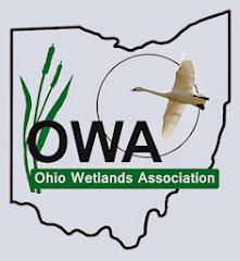 Help Ohio's Wetlands!