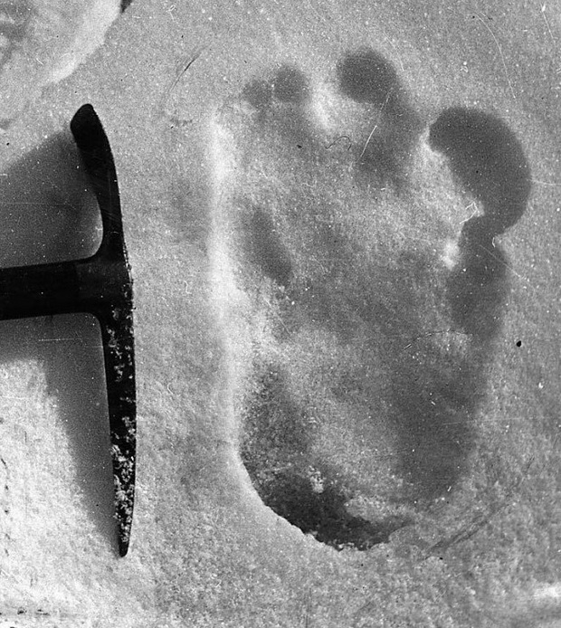love a good Bigfoot story  Naturally  you can imagine my excitement    Yeti Footprints