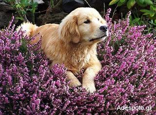 Φυσικά εντομοαπωθητικά βότανα για ζωά