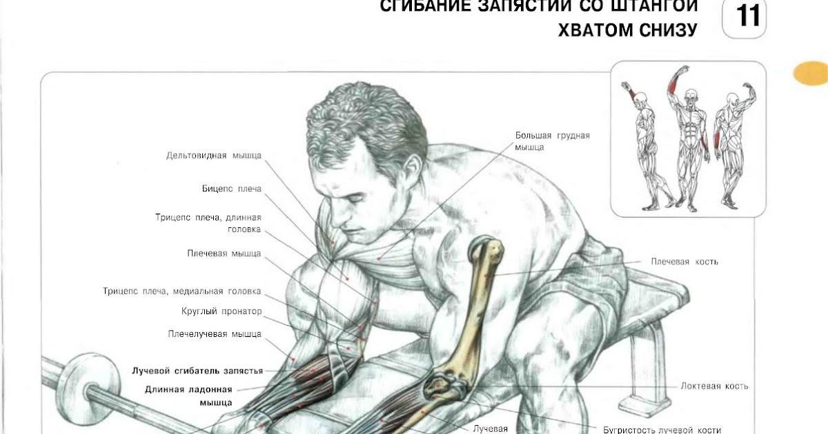 Разведение рук с гантелями на плечи