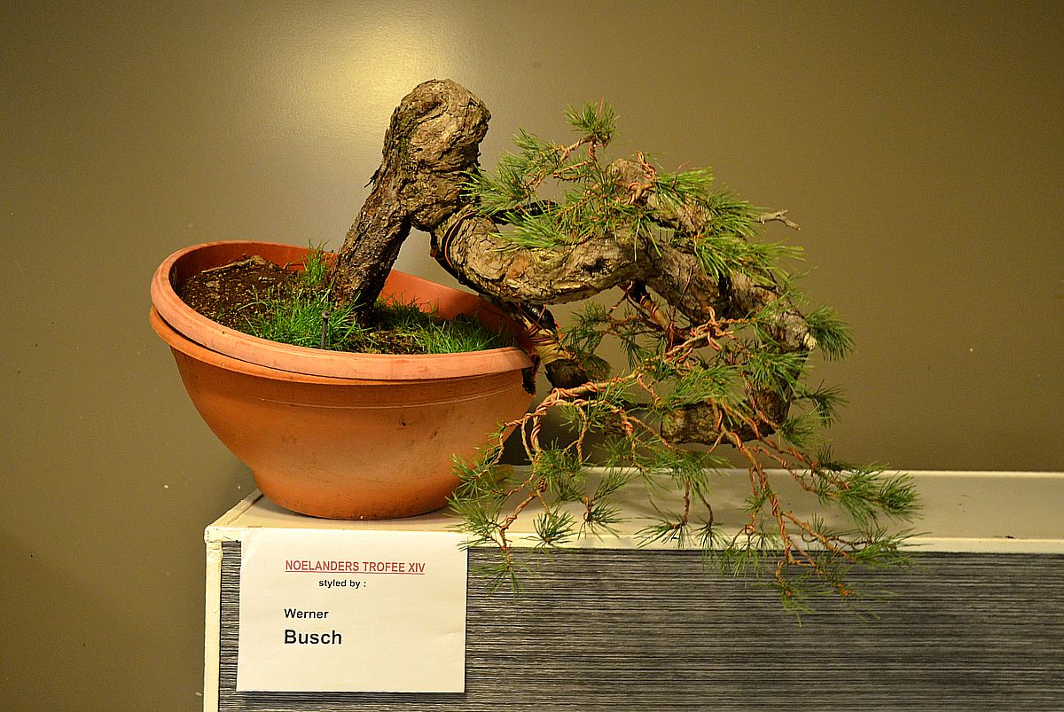 Bonsai Living Art January 2013