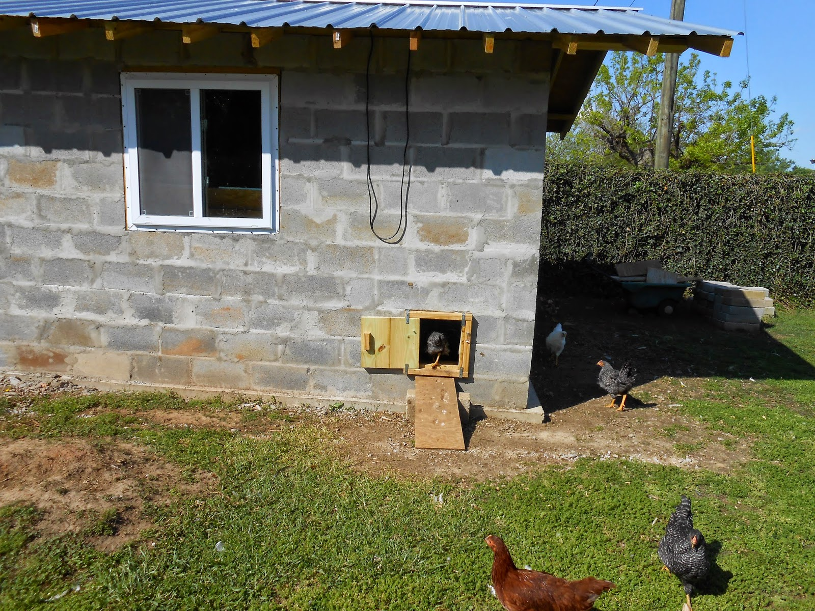 Aria fritta le galline del professor antonio for Schizzo di piccola casa