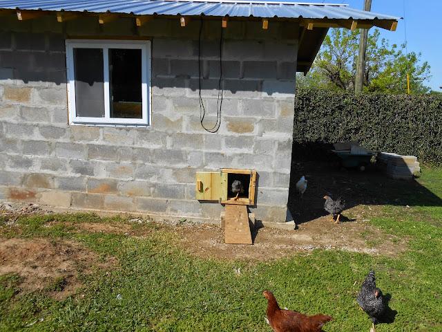 Aria fritta le galline del professor antonio for Piccola casa di merluzzo del capo