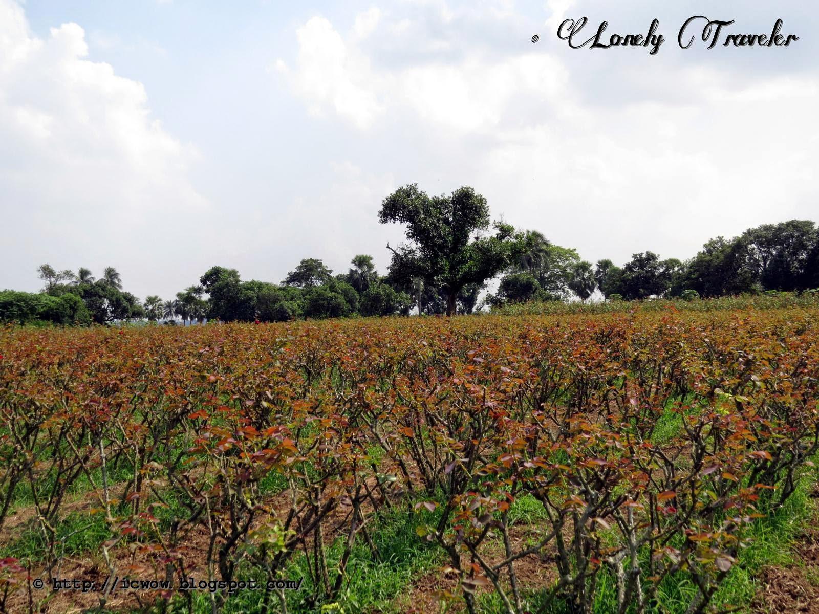 Dhaka: Flower Cultivation at Sadullapur | Lonely Traveler