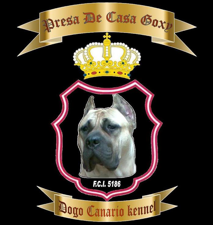 Presa De Casa Goxy - Dogo Canario kennel