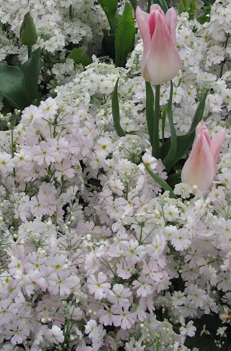 Um jardim para cuidar flores no seu jardim no inverno sim - Alegria planta cuidados ...