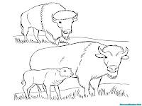 Mewarnai Gambar Kawanan Bison Dipadang Rumput