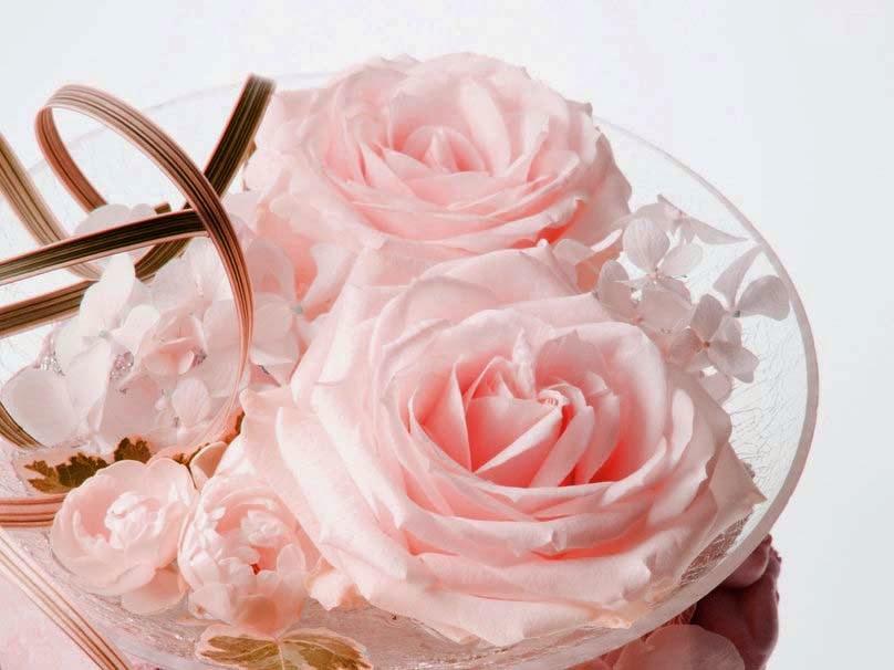 morning-white-roses-flowers-hd