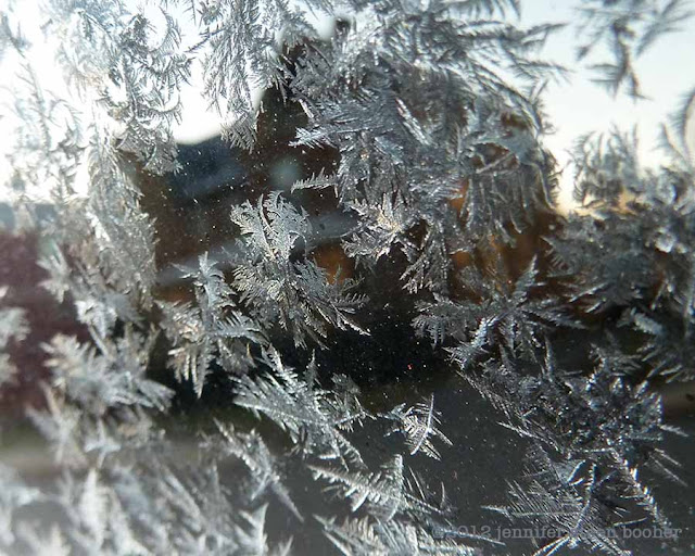 window frost fern frost ice winter frozen