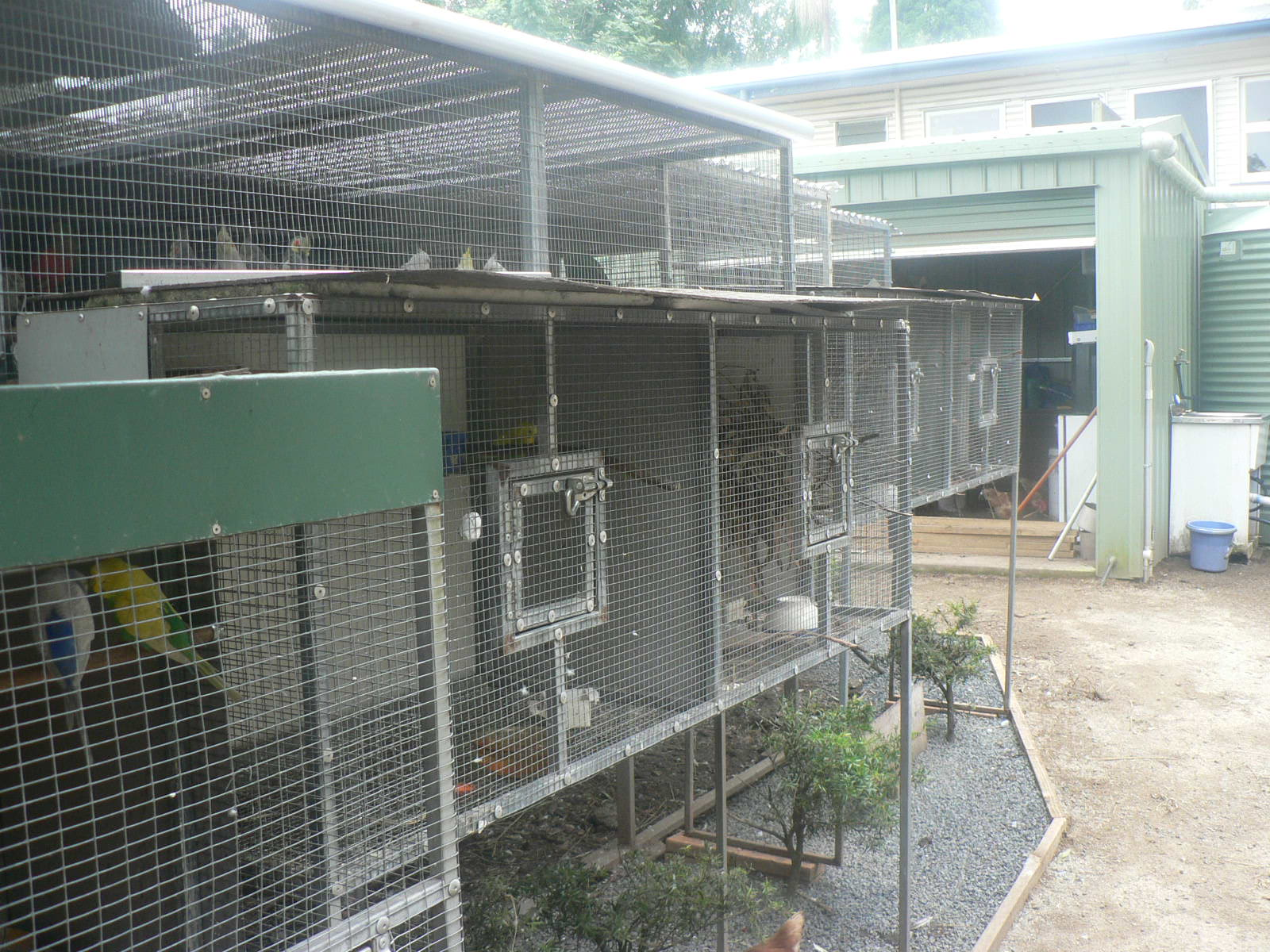 Heyden birds: My aviaries and setup