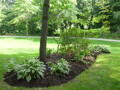 Hosta and rhodo bed at base of tree gets a neat, clean edge to keep the grass at bay.