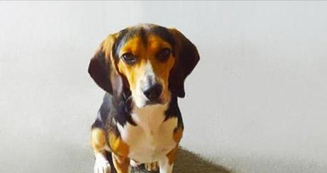 A namorada mandou ele se livrar do cachorrinho, veja o anúncio que ele fez!