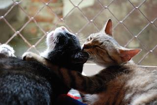 Fundacja Agapeanimali, para zakochanych kotów