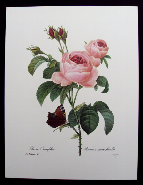 Вышивка роза и бабочка схема