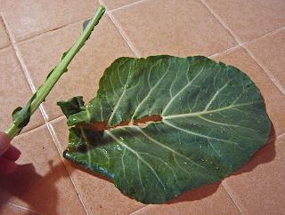 Collard Green Separated from its Stem
