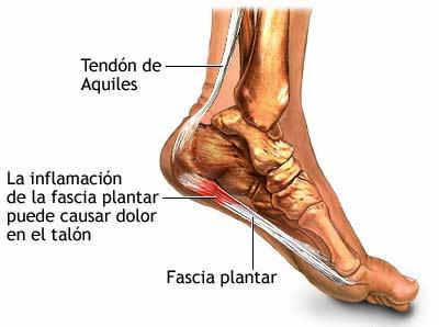 Anatomía de la fascia plantar