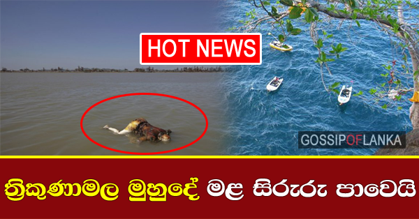HOT NEWS - 5 bodies floating in the seas of Trincomolee