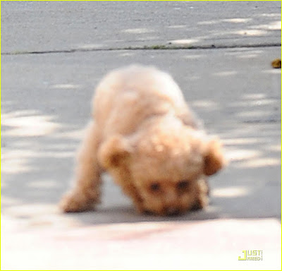 Blake Livelypuppy on Gossip Girl Spain  Blake Lively Paseando A Su Perro Penny Antes Del