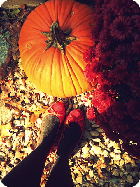 Pumpkins, fall and Mums in New England