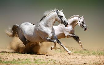 #12 Horse Wallpaper