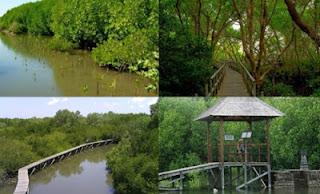 Mangrove forest in Benoa Bali, protect mangrove