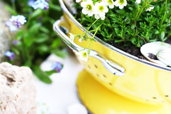 Upcycling project: Turn an old colander into a stylish planter.