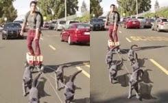 Aaron's Animals – Cat Sledding