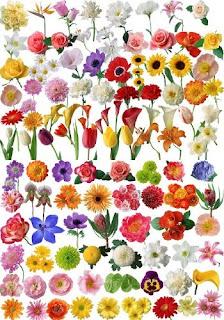 imagens de tatuagens com flores
