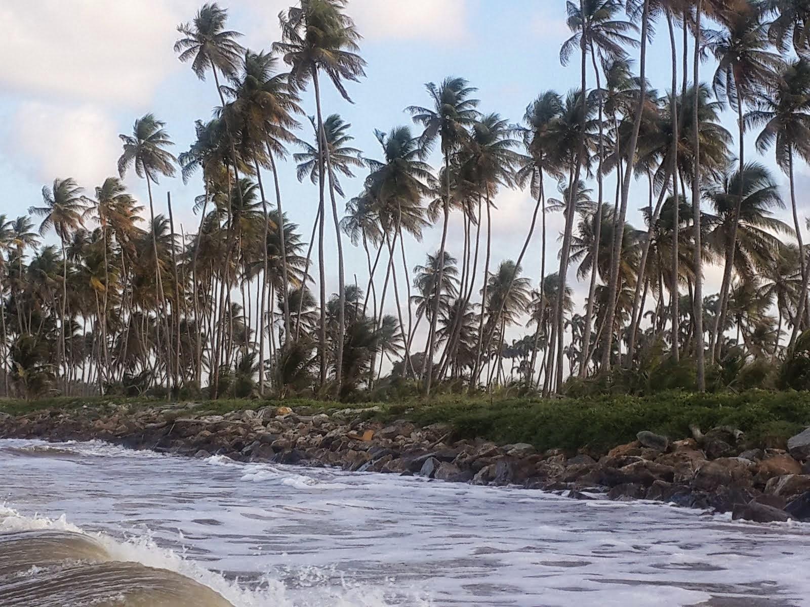 MANZANILLA: WATER MEETS THE ROCK 'WALL'