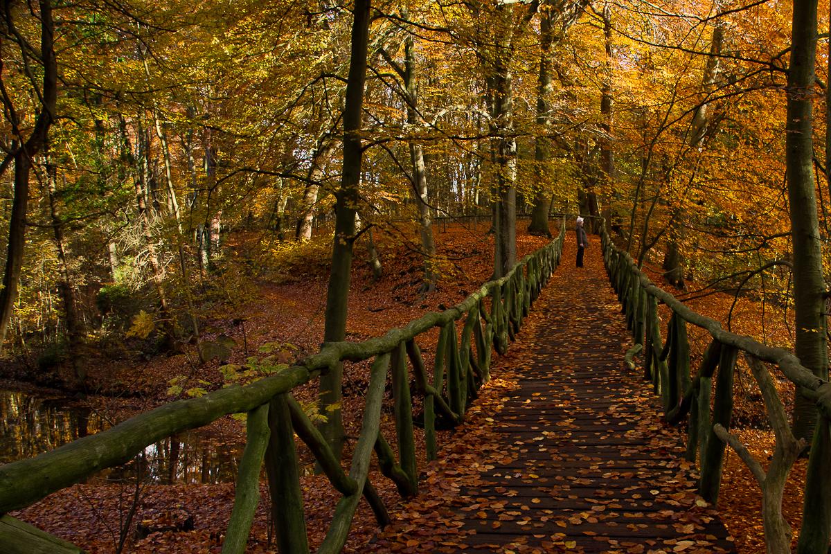 de herfst zal schitterend zijn