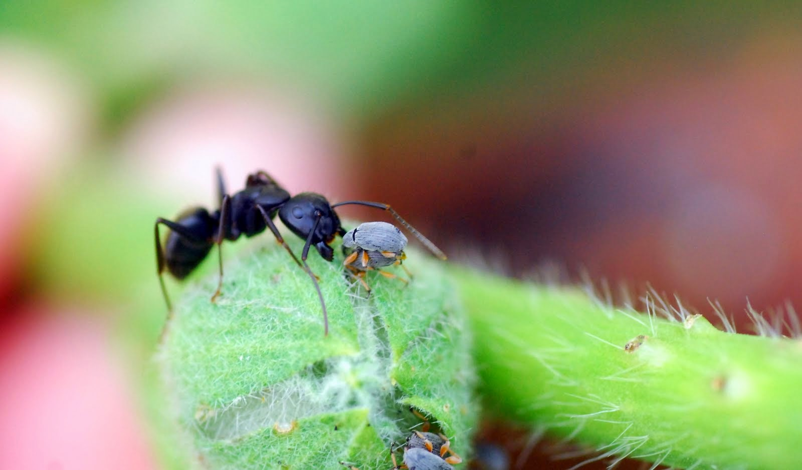 Art Photography Of Ants All About Photo