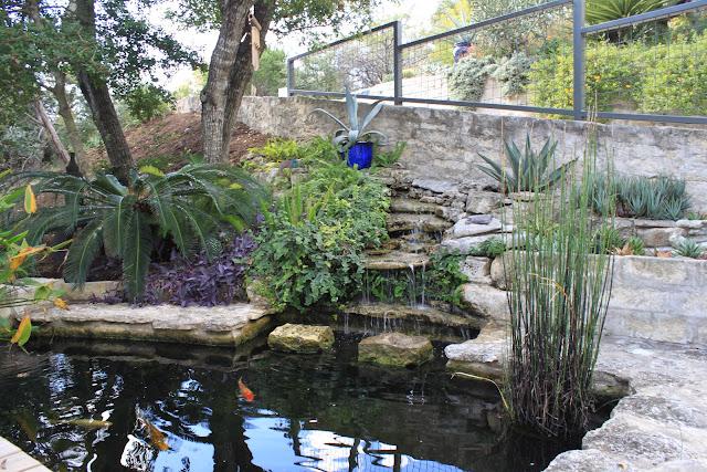 Rock oak deer open days garden tour austin jeff pavlat for Koi pool opening times