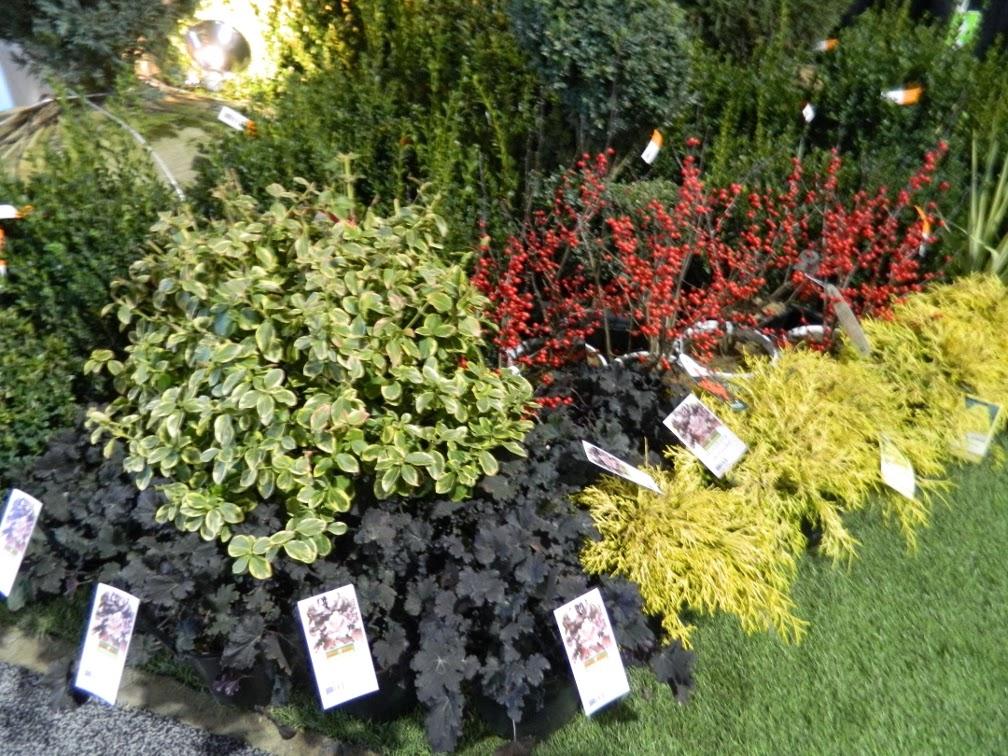 Landscape Ontario 2014 Congress perennials by garden muses-a Toronto gardening blog