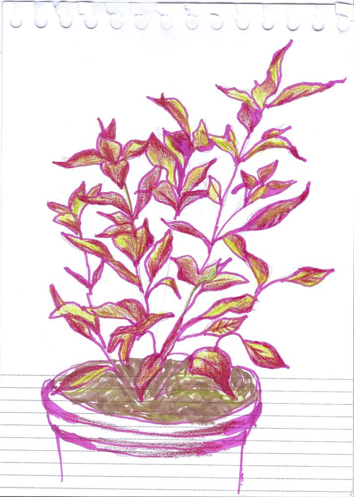 The Rainforest Garden Sketch A Plant Sunday Brazilian Red Hots