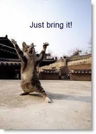 http://1.bp.blogspot.com/-pmwKZ4N4n9o/TqV31POxo8I/AAAAAAAABsA/PymyH05x96c/s1600/cat+bring+it.jpg